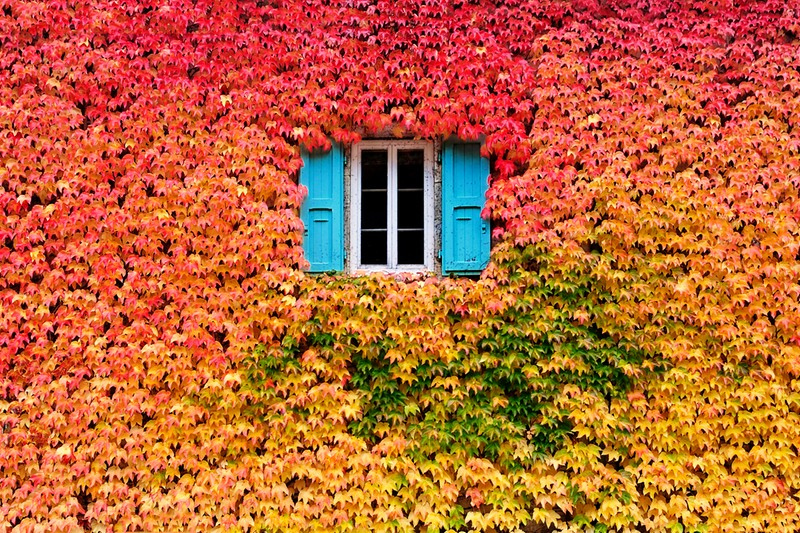 A Wall Of Fall By Eric Forey   Al Cader Delle Foglie.