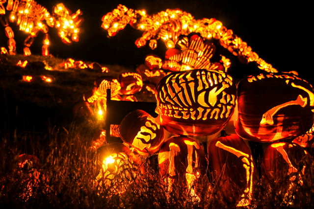 Great Jack O'Lantern Blaze - Copyright Bryan Haeffele and Joshua Bouselfor Historic Hudson Valley (5)