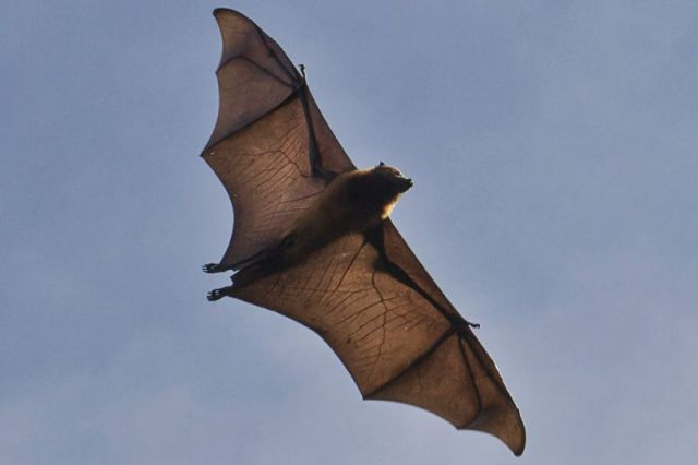 Flying Fox Pemba Island www.smartraveller.it